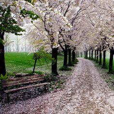 Primavera nel parco Spencer Smith, Burlington, Ontario, Canada