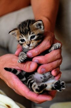 Cute kittens doing funny things will always going to cheer you up.