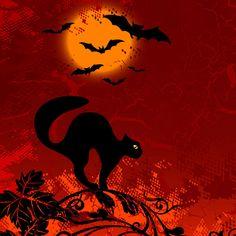 Halloween cats and kittens   bats-and-cat-halloween-ipad-wallpaper.jpg