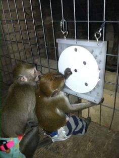 Primate store wheel forager