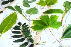 Zabawy z liściami