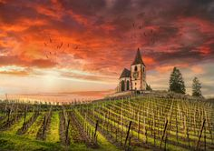 Hunawihr - Alsace - France - Saint-Jacques-le-Majeur Church and vineyards Ansel Adams, Fine Art Photo, Alsace, Mother Nature, New Art, Monument Valley, Vineyard, France, Landscape