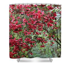 Azalea Dream Shower Curtain by Carol Groenen  #showercurtains #azaleas #azalea