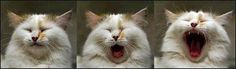 <3 LOVE CATS
