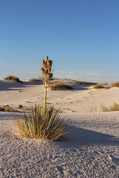 i scream for sunshine: white sands national monument  http://www.iscreamforsunshine.com/2014/12/white-sands-national-monument.html