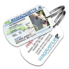 Adorable Massachusetts Driver's License Pet Tag