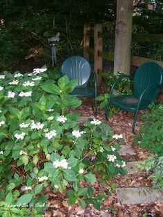 Shady seating by the hydrangea. (6/9/2012) Garden of Len & Barb Rosen