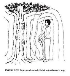Los arboles meditan en todo momento y la energía sutil es su lenguaje natural. A medida que su dominio de este lenguaje aumente, podrá comenzar a entablar una relación con ellos. Le ayudaran a abrir los canales de energía y a cultivar la calma, la presencia y la vitalidad. Usted, a su vez, puede ayudarles…
