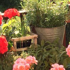 Il Giardino del Brocante: Lampadario fai da te: fil di ferro, edera ...