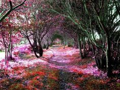 18 incredible magic paths to walk down - Rhododendron Tunnel in in Reenagross Park, Kenmare, Ireland