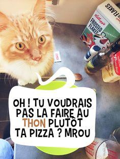 séance cuisine avec Pixel Le Chat pour la recette de la pizza automnale ! Photo Chat, Pixel, Lol, Photos, Recipe, Kitchens, Pictures, Fun