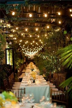 // outdoor receptions : twinkle lights //