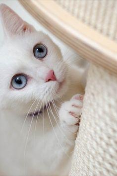 I 5 migliori tiragraffi per gatto  . . . #tiragraffi #tiragraffipergatto #tiragraffipergatto #animalidomestici #animali #pets #mondoanimalidomestici Animals, Animales, Animaux, Animais, Animal