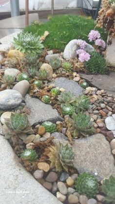 Courtyard Garden Ideas Layout and Low Maintenance Garden Ideas Water. garden ideas landscaping tips and tricks Mesmerizing Zen Garden Landscaping Ideas Succulent Landscaping, Landscaping With Rocks, Front Yard Landscaping, Succulents Garden, Backyard Landscaping, Landscaping Ideas, Succulent Rock Garden, Backyard Ideas, Decorative Rock Landscaping