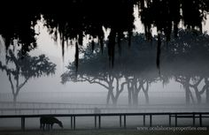 Bridlewood | Ocala Farm for Sale | Ocala Horse Properties