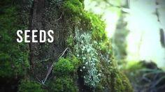 Why Seeds  www.myrainlife.com/nancyneede