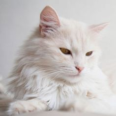 When you're trying to reduce pet hair around the house, grooming your cat or dog is the first—and most important—step.