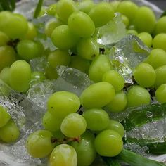 Shine muscat from Nagano is on sale  シャインマスカット大好評です  #kaiseki #kitaohj#shinemuscat #シャインマスカット #muscat #grape #fruits #instafood #foodpic #foodporn #yum #yummy #thonglor #sukhumvit #bangkok #อาหารญ by kitaohji_thailand