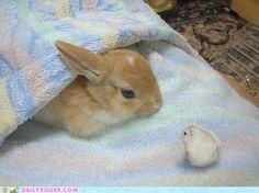 small.....smaller