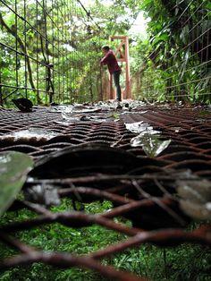 Preciosa fotografía de Rainforest bridge, Monteverde (Costa Rica)