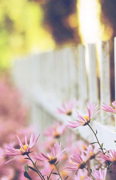 pink flowers around white fence..better!