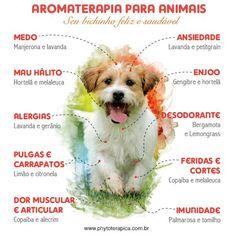 Aromaterapia para os animais. Baby Dogs, Pet Dogs, Dog Cat, Dog Paw Pads, Doterra Oils, Dog Bows, Diy Stuffed Animals, Alternative Medicine, Pet Health