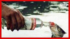 15 LEGI CRETINE din INTREAGA LUME Water Bottle, Water Bottles