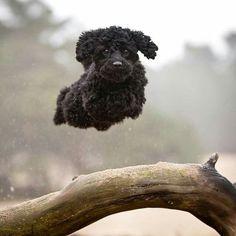 Hover dog :-)