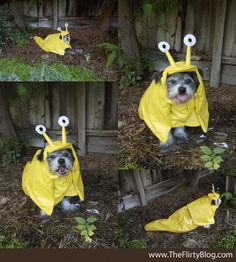 First he was sushi, then the Dog Whisperer, pupcorn, a Chia Pet, and sea otter. Now who's the cutest banana slug ever?