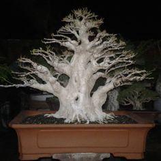"54 Likes, 1 Comments - Fery Abdi Fatah (@fery_abdi_fatah) on Instagram: ""#bonsai #tree #art #garden #bonsaitree #world #❤️"""