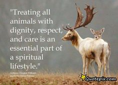 Treating all animals with dignity, respect and care is an essential part of a spiritual lifestyle. except spiders, ants, flies and snakes. Beautiful Creatures, Animals Beautiful, Animals And Pets, Cute Animals, Wild Animals, Vegan Quotes, Vegan Memes, Stop Animal Cruelty, Animal Quotes