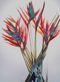 Still life photographer Candice Milon - Personal Work - Bunch #graphic #flowers
