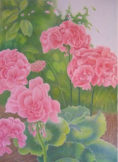 """Growing Geraniums"" Most recent drawing again showing red or pink flowers which seem to be my favorites lately. www.marykhyatt.com"