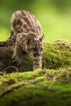 beautiful-wildlife: