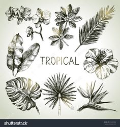 Hand Drawn Sketch Tropical Plants Set. Vector Illustrations - 316265588 : Shutterstock
