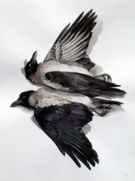 Bird skins on Pinterest   Bird Skull, Division and Natural History ...