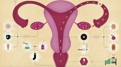 Your Guide to Your Lady Parts. Do you really know which parts go where…and do what? Check out this helpful map to your anatomy. Health And Beauty, Health And Wellness, Women's Health, Health Tips, Health Care, Female Sterilization, Lady Parts, Fitness Activity Tracker, Daily Exercise Routines
