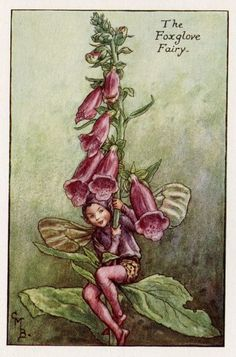This beautiful Foxglove Flower Fairy Vintage Print by Cicely Mary Barker was…
