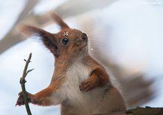 20 portraits animaliers grandioses de Sergey Polyushko - page 3