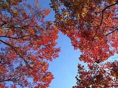 Autumn Colors #flickr #photo #iphoneography #japan