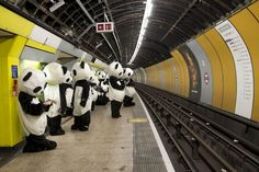 Panda Awareness Week: 108 bears go wild in London - Mirror Online