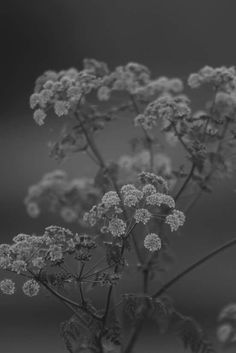 75 Mejores Imagenes De Flores Delicadas Blanco Y Negro Black