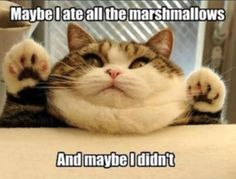 maybe i ate all the marshmallows ... and  maybe i didn't