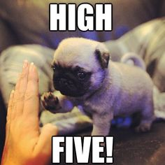 1000+ images about High five yo! on Pinterest | High five ...