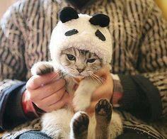 panda cat ^^