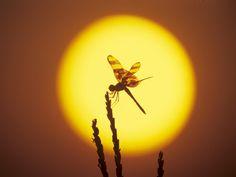 Luz, Naturaleza, Contraste