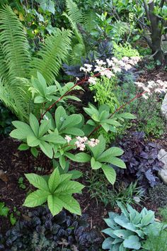 Rodgersia, heuchera, hosta, fern and carex Back Gardens, Outdoor Gardens, Shade Garden Plants, Moon Garden, Woodland Garden, Small Garden Design, Tropical Garden, Yard Landscaping, Gardening