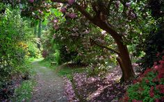 Leonardslee Gardens, Lower Beeding, West Sussex, UK | Tranquil walks through woodlands filled with flowering azaleas and rhododendrons in May (3 of 23) | by ukgardenphotos