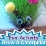 """""""Grow a Caterpillar"""": Great activity to discuss plants & bugs, easily implemented at home"""