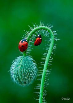 Ladybugs exploring